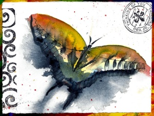 11.23Butterfly